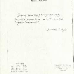 Image for K1045 - Expert opinion by Longhi, circa 1920s-1950s